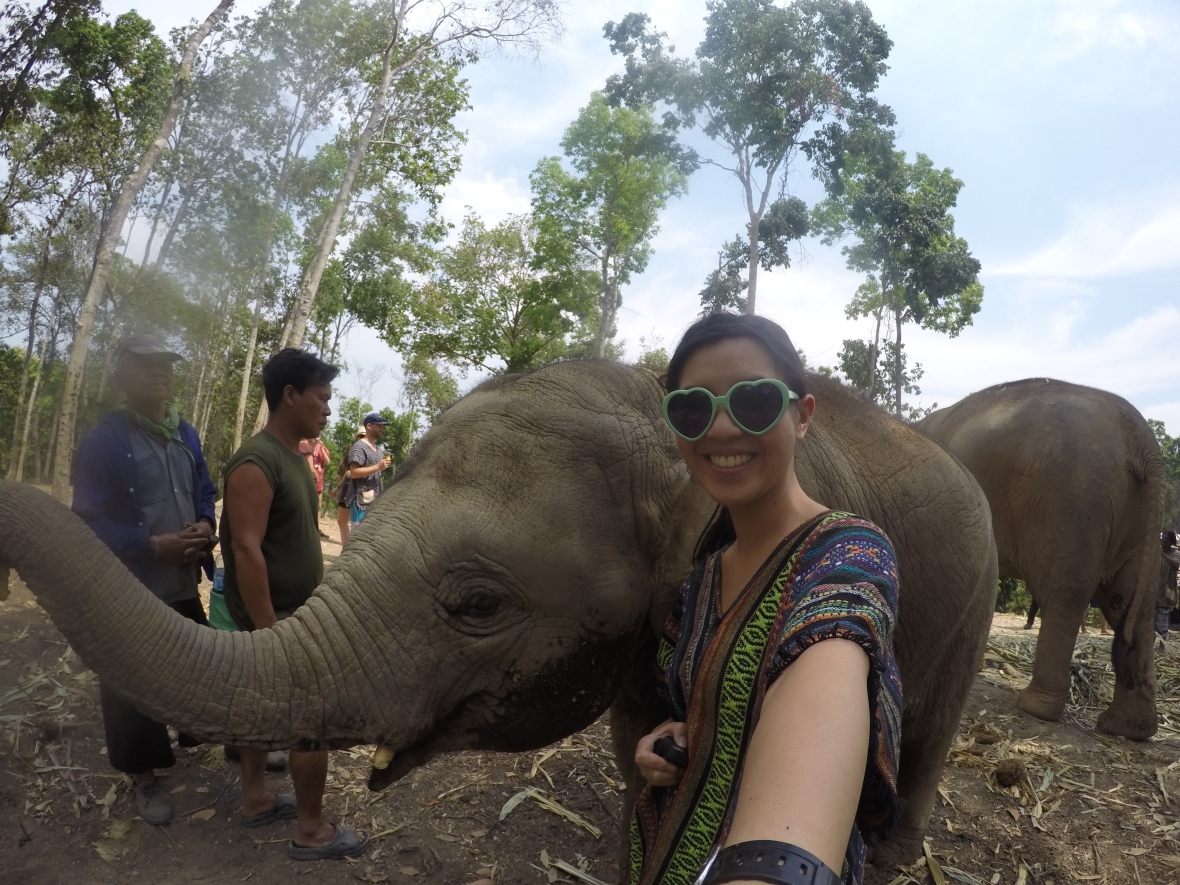 The truth about elephants in thailand 33andfree dcim100goprogopr0384 buycottarizona