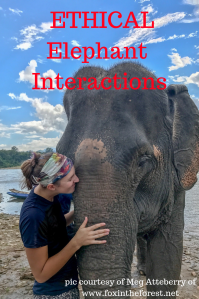 Ethical Elephant Interactions. Read about ethical experiences from multiple travel bloggers. The truth about elephant rides and some sanctuaries.
