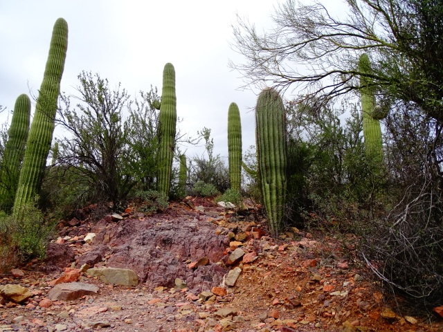 Hiking Brown Mountain Trail – Tucson, Arizona